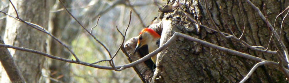 cropped-2013-0408-flicker