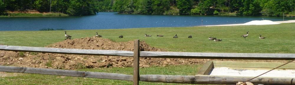 cropped-2013-05-geese