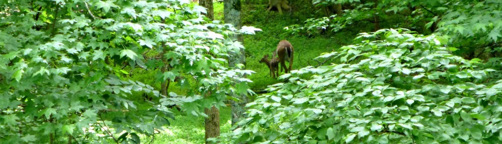 cropped-2013-0609-fawn-and-doe