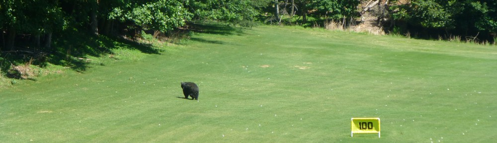 cropped-2013-0614-bear-driving-range