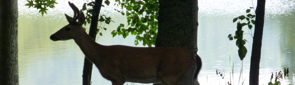 cropped-2013-07-buck-sallie-doss