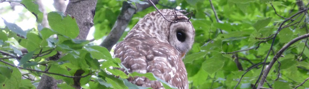 cropped-2013-07-owl