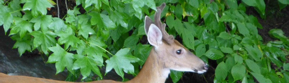 cropped-2013-0807-buck