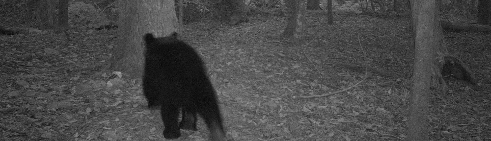 cropped-2013-09-bear-trailcam