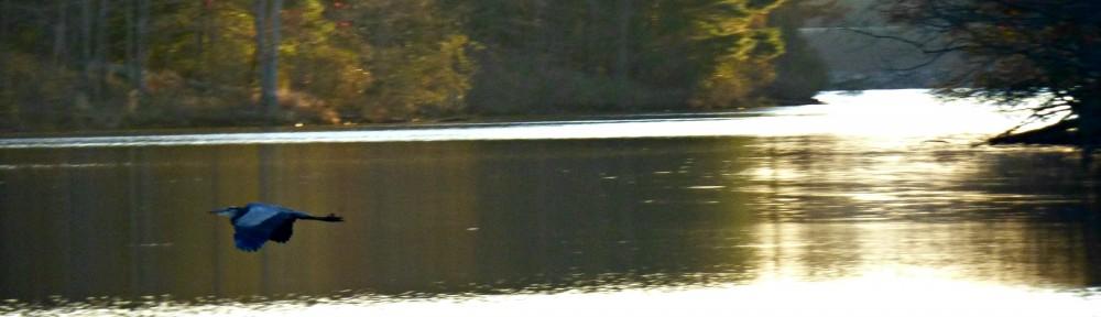 cropped-2013-1114-heron-x