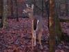 cropped-2013-0102-deer-b