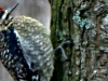cropped-2013-0109-flicker-bird