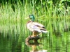 cropped-2013-0602-duck-lake-tamarack-spillway
