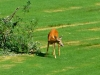 cropped-2013-0721-deer-driving-range-2
