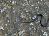 cropped-2013-0818-baby-snake-penny