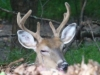 cropped-2013-09-sleepy-buck
