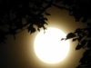 cropped-2013-10-moon-2
