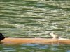 cropped-2013-1009-turtle-log-2
