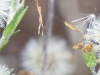 cropped-2013-11-dandelion-puff