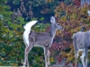 cropped-2013-1103-three-deer
