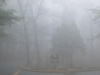 cropped-2013-12-foggy-front-gate