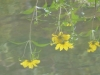 cropped-2013-yellow-flowers-hole-3