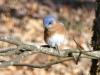 2015-0205-bluebird-1000x288.jpg