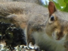 2015-0906-squirrel-looking-1000x288.jpg