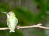 2015-0907-hummingbird-tree-limb-header-1000x288.jpg