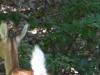 2015-0914-fawn-whitetail-1000x288.jpg