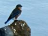 2015-1023-dam-bluebirdx-1000x288.jpg