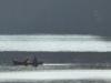 2015-1029-dog-canoe-1000x288.jpg