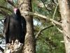 2015-1220-vulture1-1000x288.jpg