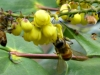 cropped-2016-0201-2-bees-2-ants-mahonia-header-1000x288.jpg