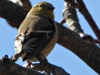 cropped-2016-0212-gold-finch-header-1000x288.jpg
