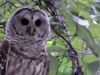 cropped-2016-0614-owl-header-1000x288.jpg