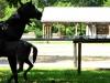 cropped-2016-0731-horse-statue-header-z-1000x288.jpg