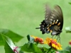 cropped-2016-0812-butterfly-lantana-header-1000x288.jpg