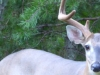 cropped-2016-0825-8point-buck-1000x288.jpg