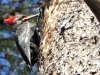cropped-2017-0216-pileated-woodpecker-header1-1000x288.jpg