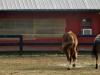 cropped-2017-0320-happy-horses-1000x288.jpg