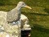 cropped-2017-0417-bird-spillway-header-1000x288.jpg