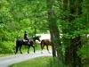 cropped-2017-0430-horses-header-1000x288.jpg