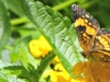 cropped-2017-0709-butterfly-and-ant-header-1000x288.jpg