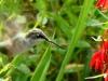 cropped-2017-0806-hummingbird-cardinal-flower-header-1000x288.jpg