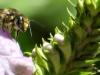 cropped-2017-0813-bee-header-1000x288.jpg