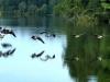 cropped-2017-0813-flying-geese-header-x1-1000x288.jpg