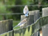 cropped-2017-0831-juvenile-bluebirds-header-1000x288.jpg