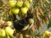 cropped-P1600062-2017-0223-bee-mahonia-1000x288.jpg