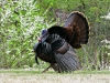 2014-0414-turkey.jpg