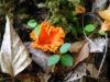 2012 09025 orange fungus hole 15.JPG