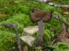 P1210489 2014 0614 black mushroom.JPG