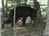 2012-0707-bear_0