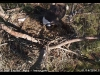 2014-0114-berry-eagle-cam-capture-12