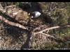 2014-0114-berry-eagle-cam-capture-13